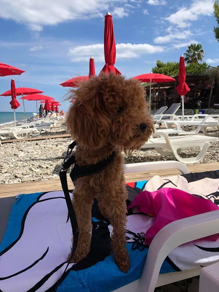 Energy Beach Bar