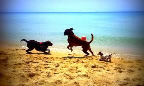 Tiliguerta Dog Beach