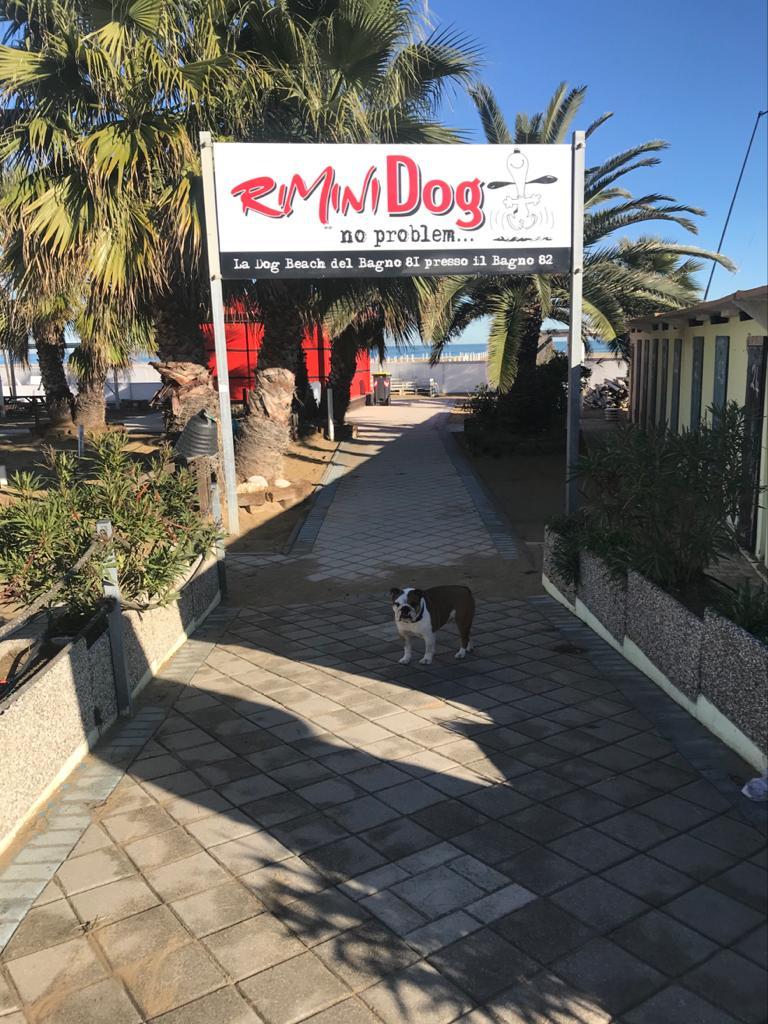 Rimini Dog No Problem Beach 81