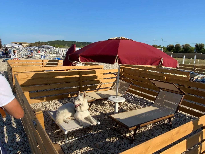 Yoki Dogs Family & Beach