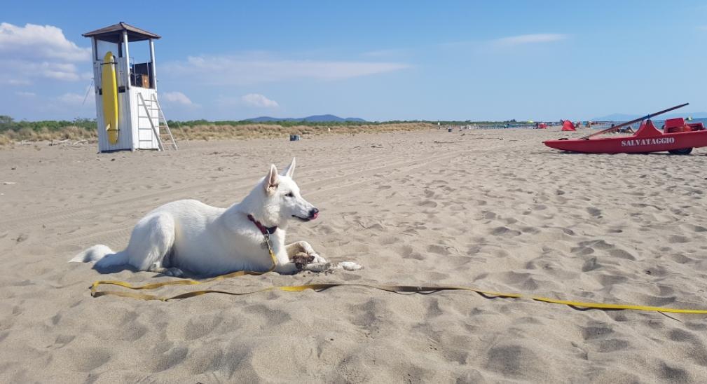Dog Beach Marina Di Grosseto