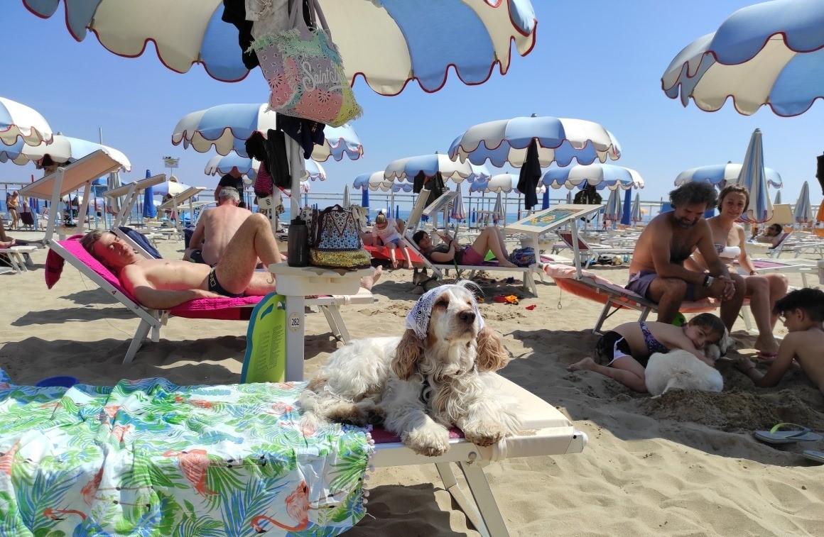 Pet Beach - La Spiaggia Delle Donne